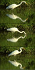 Great Egret Catching A Fish by WabbyTwaxx