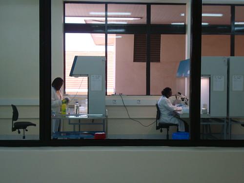 Merkel visits ILRI Nairobi: Lab shot