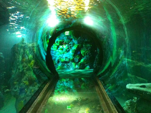Sealife Aquarium Grapevine 37 Flickr Photo Sharing