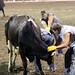 Sarpy Fair Rodeo 496