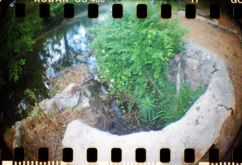 trees nature river sprocketholes dianaflomographykodakfilm35mmfisheyeruralcountrysidegeorgia