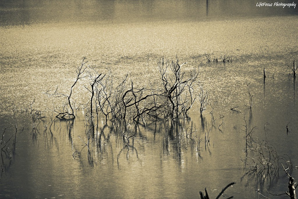 dead twigs reflection