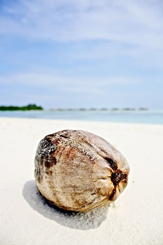 coconut HDR