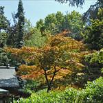 ภาพของ Village japonais. france boulognebillancourt jardinjaponais dalbera jardinalbertkhan