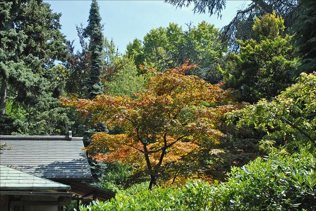 le jardin japonais albert khan boulogne billancourt flickr photo sharing. Black Bedroom Furniture Sets. Home Design Ideas
