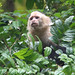 White-throated Capuchin - Photo (c) Maris Pukitis, some rights reserved (CC BY-NC-SA)