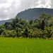 Panorama : Countryside of Harau Valley by Drriss & Marrionn