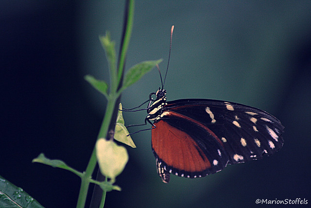 Butterfly flying away - photo#37