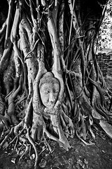 Buddha vs. Tree