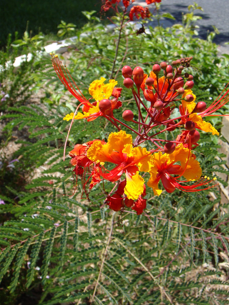 Pride of Barbados 2011