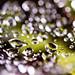 Nature's Diamonds by BarbaraCZ
