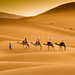 Travelling with Camels VIII by Beum Gallery
