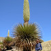 David Edward's admiring Puya raymondii - the worlds tallest flower - in Peru  Photo Credits: Felicity Ansell