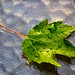 Leaf After Rainstorm by Todd Hakala