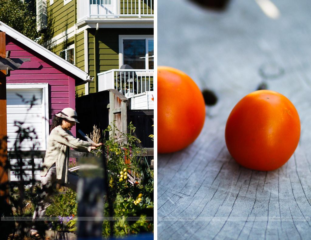 community gardner & tomatoes