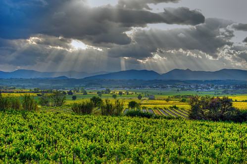 light cloud sun green vineyard vines wine sunburst agriculture languedoc