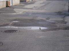 floor(0.0), sidewalk(0.0), sand(0.0), roof(0.0), driveway(0.0), flooring(0.0), asphalt(1.0), concrete(1.0), road surface(1.0), walkway(1.0), tarmac(1.0),