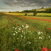Dorset by peterspencer49