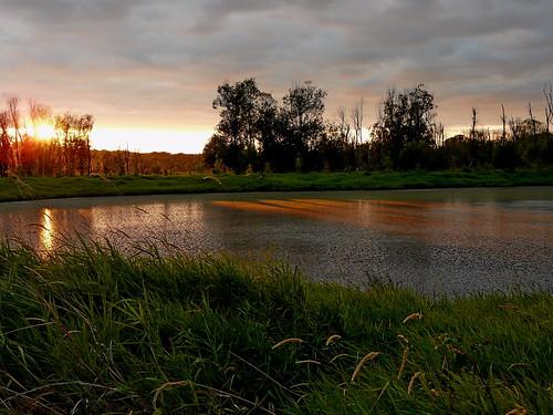 trees sunset reflection grass washington unfinished ducklake ridgefield odt ridgefieldnationalwildliferefuge