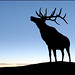 elk silhouette by sharply_done