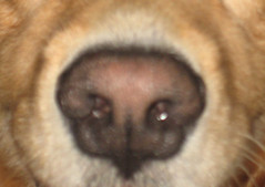 blurrynose