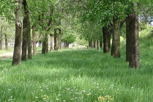 Cañada Jimena