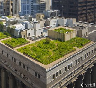 green roof, Chicago City Hall (courtesy Chicago Dept of Tourism & Culture)