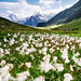 Switerland - Belalp: Cotton Fields