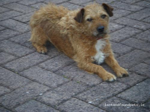 Sun, Jul 24th, 2011 Found Female Dog - Knocklishien Beg, Kiltegan, Wicklow