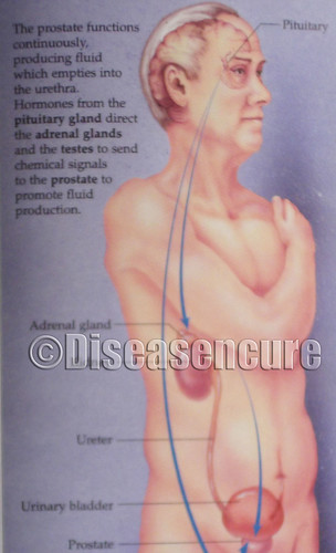 Men health - Diseasencure.com