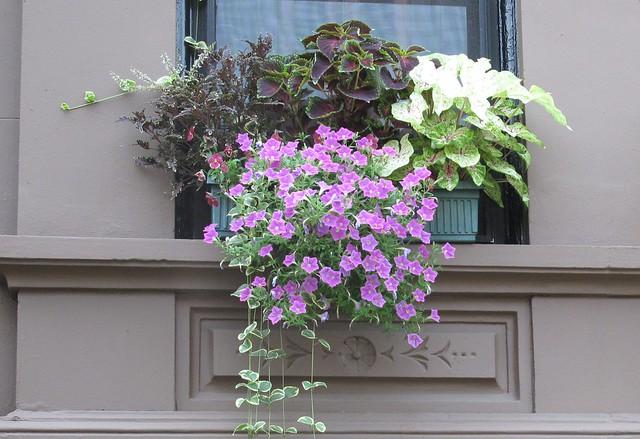Greenest Block in Brooklyn 2011 finalist at 430 Eighth Street.