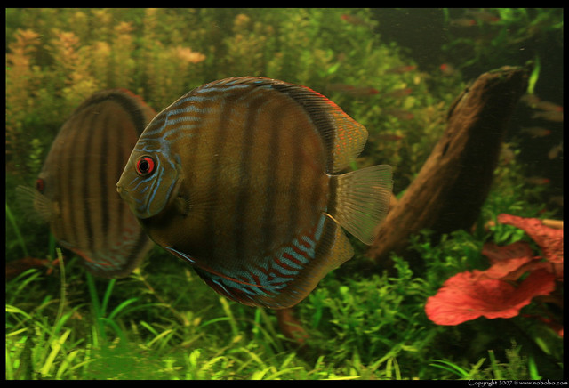 Green Tefe, discus Flickr - Photo Sharing!