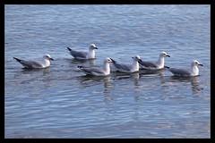 Six lazy Sea Gulls-1=