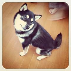 子犬みたいな写真になった┏(´ω` ┓)┓