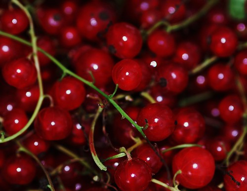 Rosy Red Currants