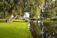Serene scenery in Rotterdam