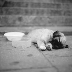 homeless puppy