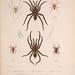 Histoire physique, politique et naturelle de l'ile de Cuba: Atlas:Insects