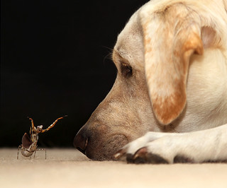 Mantis Tries To Scare Dog