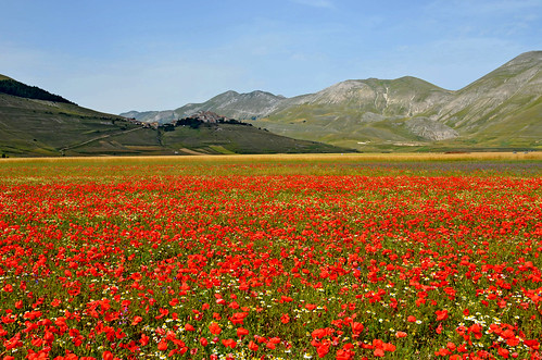 I papaveri e Castelluccio - Poppies and Castelluccio
