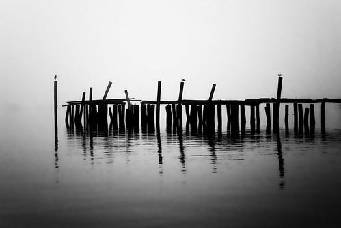 old morning summer blackandwhite bw mist heron broken fog ma harbor pier provincetown capecod foggy calm wharf cape serene giantonio kgiantonio kengiantonio