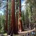 Yosemite - Aug 2011 - 042