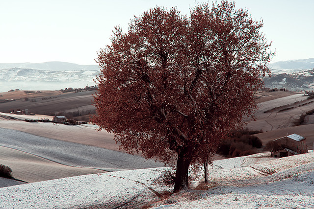 Landscape Italy tree on the snow in a foggy day