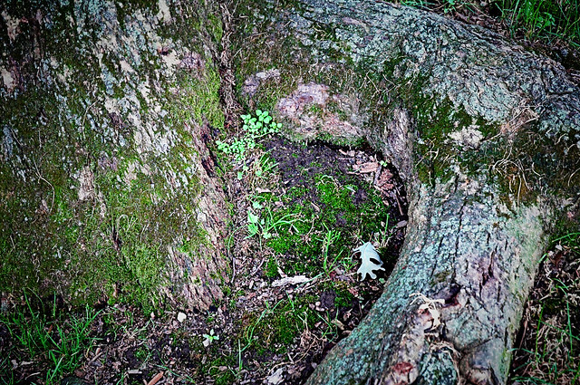 Wild women of the woods tree flickr photo sharing
