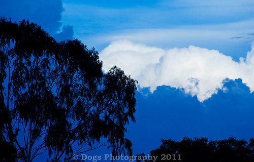 blue tree clouds sudan sigma300mm28