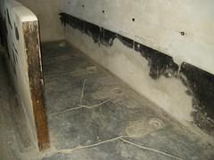 wood(0.0), tile(0.0), hardwood(0.0), plaster(0.0), flooring(0.0), floor(1.0), mold(1.0), wall(1.0), room(1.0),