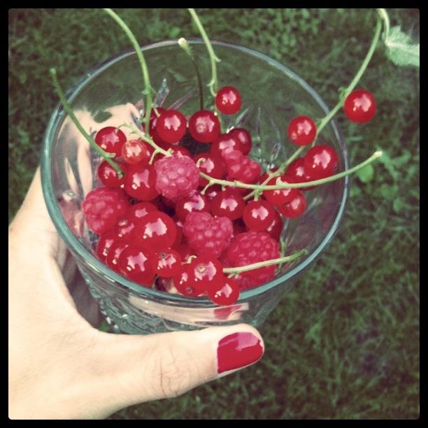 rött plock i trädgården
