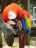 Bird reserve in Copan, Honduras.