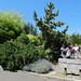 sscc arboretum