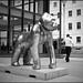 WOW! Gorilla in the City by Daniel Underhill
